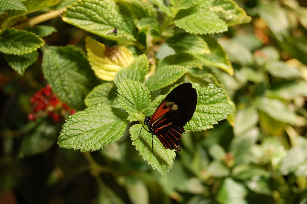 red butterfly on green leaves