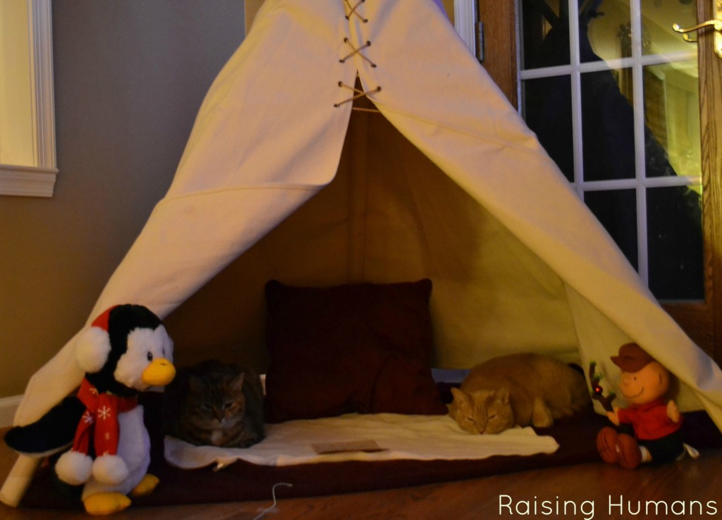 cats in teepee